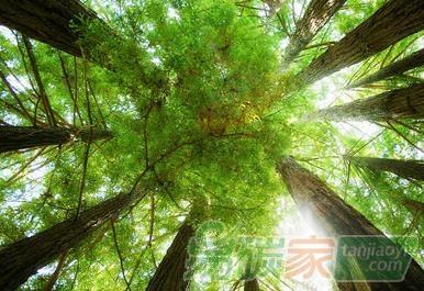 【成功案例解析经验分享】农民种树林地如何通过碳汇交易来赚钱增收