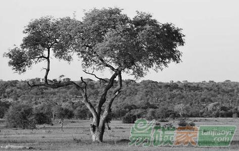 恢復陸地(di)生(sheng)態系統(tong):碳(tan)減排新路徑